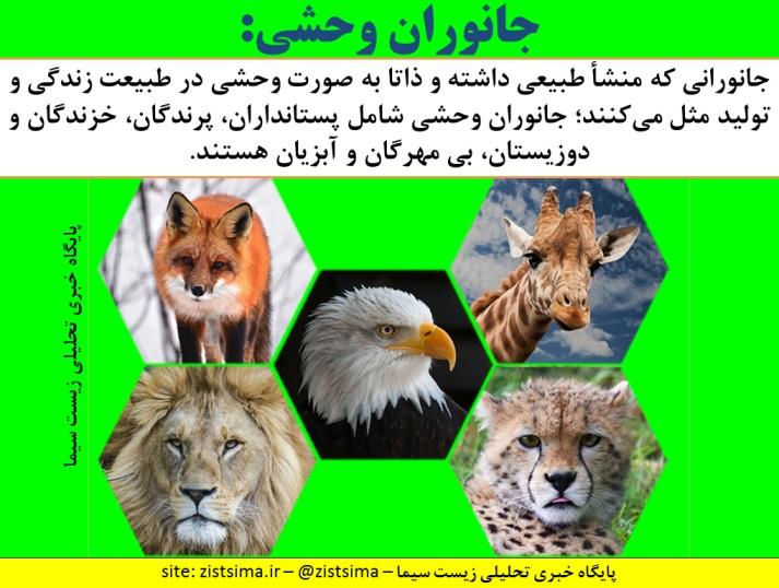 تعریف جانوران وحشی در آئیننامه اجرایی قانون شکار و صید منتشر شد