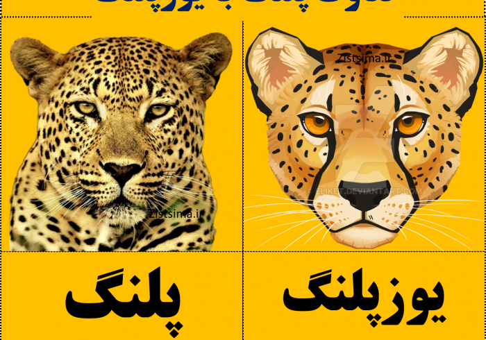 تفاوت پلنگ با یوزپلنگ