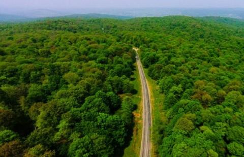 ممنوعیت برداشت چوب درختان شکسته و آسیبدیده