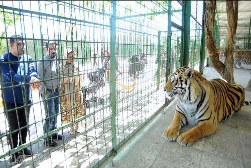 آغاز عملیات بازسازی باغ وحش دانشگاه زابل پس از بازدید کارشناسان محیط زیست
