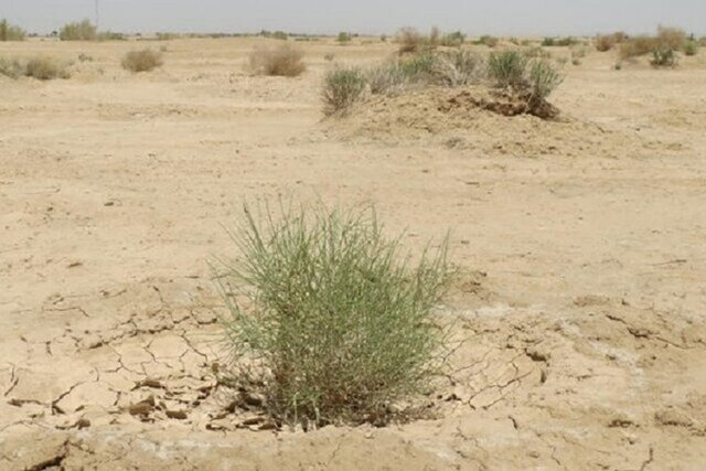 مطالعه بیش از ۳۰۰۰۰ هکتار پروژه بیابان زدایی در استان خراسان شمالی